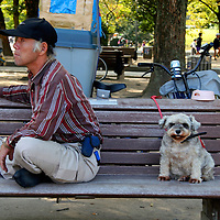 Asia, Japan, Hiroshima. Man and dog with attitudes on bench.