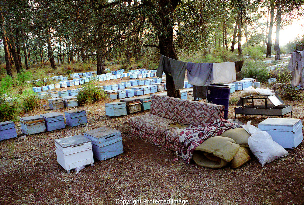 Migrant bee keepers temporary homes by bee hives in pine forests near Akyaka in South western Turkey.