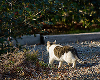 Local Cat Leaving. Early Winter Backyard Nature in New Jersey. Image taken with a Nikon D2xs and 80-400 mm VR lens (ISO 200, 400 mm, f/5.6, 1/350 sec).