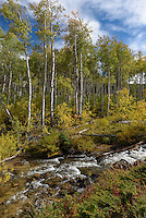 Rapid Creek flows past golden aspen trees in the Bighorn Mountains.