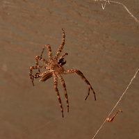 A spider hides in a shed near Lake of the Woods,  Ontario, Canada