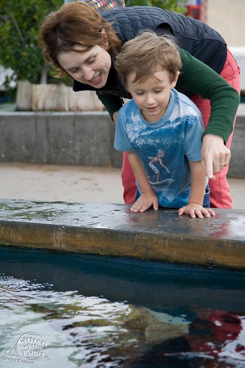 Shark Lagoon, Aquarium of the Pacific, Long Beach, Los Angeles County, California, USA (MR)