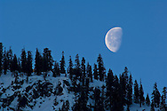 Moon set at dawn over trees on snow covered mountain ridge in early spring above Yosemite Valley, California