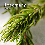 Rosemary Pictures | Rosemary Food Photos Images & Fotos