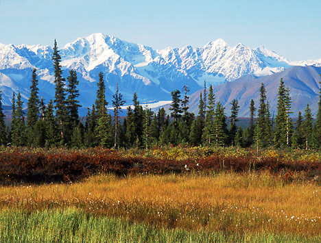 Alaska. Denali Highway east of Cantwell with Nenana Mountain and Nenana Glacier. White Spruce.