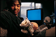 Relaxing in his office at the Mechanical Engineering Lab in Tsukuba, Japan, Takanori Shibata pats a derivative product from his research: a robot cat named Tama. Shibata is a roboticist who studied with MIT robot guru Rodney Brooks before heading his own lab. Omron, a Japanese engineering company, applied Shibata's discoveries to produce Tama, a mechanical pet with sensors beneath its fur that react to sound and touch.  Omron says it has no plans as of yet to commercialize its robot cats. From the book Robo sapiens: Evolution of a New Species, page 227.