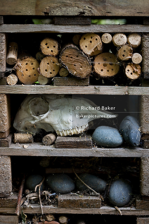 A sheep skul, stones and assorted wood encourage wildlife into a garden insect house