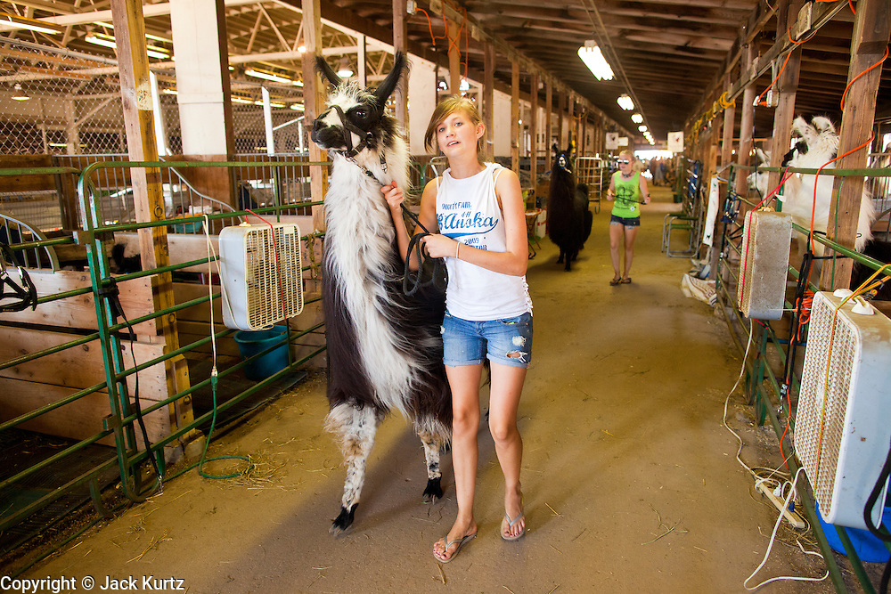 """01 SEPTEMBER 2011 - ST. PAUL, MN:  High school 4-H students leads their llamas out of the barn at the Minnesota State Fair. The Minnesota State Fair is one of the largest state fairs in the United States. It's called """"the Great Minnesota Get Together"""" and includes numerous agricultural exhibits, a vast midway with rides and games, horse shows and rodeos. Nearly two million people a year visit the fair, which is located in St. Paul.   PHOTO BY JACK KURTZ"""