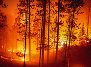 PINE FOREST FIRE, PRESCRIBED