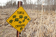 """Washingtonville, New York - A """"turtle crossing"""" sign by a wetland marsh on April 3, 2011."""
