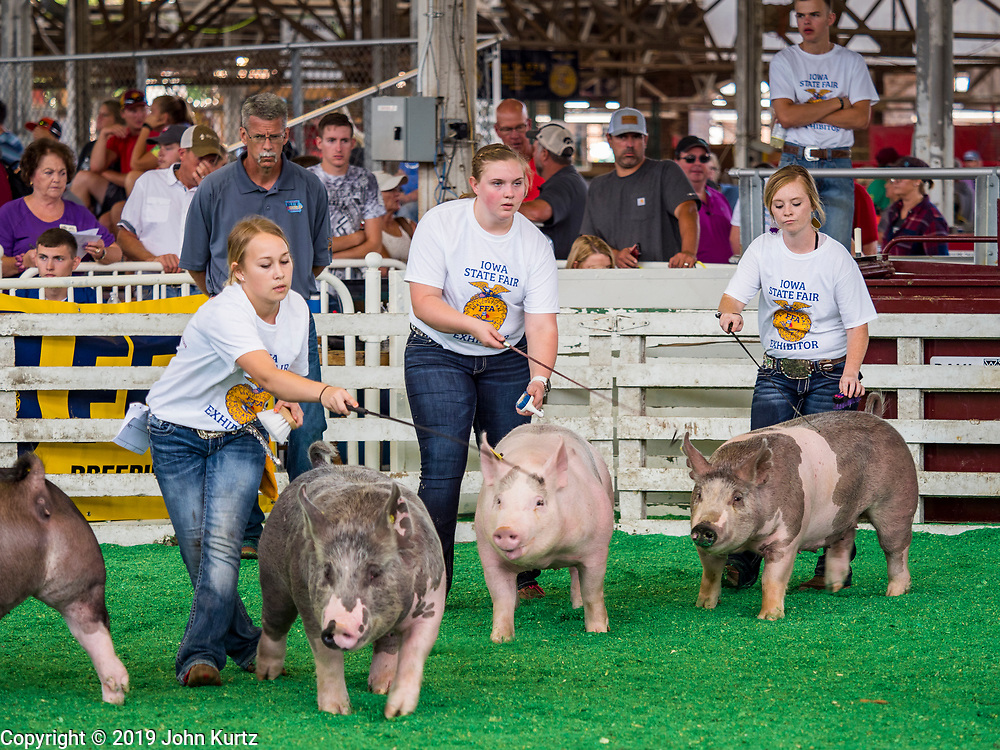 08 AUGUST 2019 - DES MOINES, IOWA: FFA members show their hogs on the first day of the Iowa State Fair. The Iowa State Fair is one of the largest state fairs in the U.S. More than one million people usually visit the fair during its ten day run. The 2019 fair run from August 8 to 18.          PHOTO BY JACK KURTZ