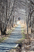The Jesup Trail beckons the hiker onward through a narrow allée of red maple and paper birch trees.