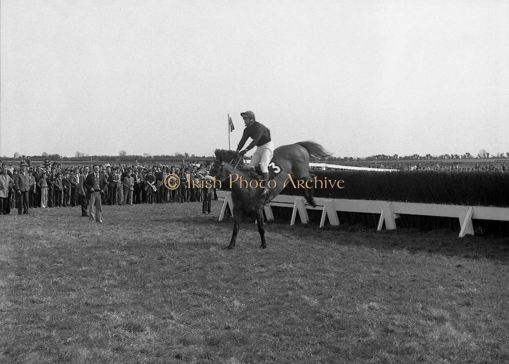 "Irish Distillers Grand National at Fairyhouse.  (M66)..1979..16.04.1979..04.16.1979..16th April 1979..The Irish Distillers Grand National was run today at Fairyhouse Racecourse, Co Meath.The race over 3.5miles is valued at £20,000. the winning trainer will also receive the Tom Dreaper,Perpetual Trophy which will be presented by Mrs Betty Dreaper..""Tied Cottage"" ridden by Anthony Robinson is pictured leading over the last fence on his way to winning The Irish Distillers Grand National."