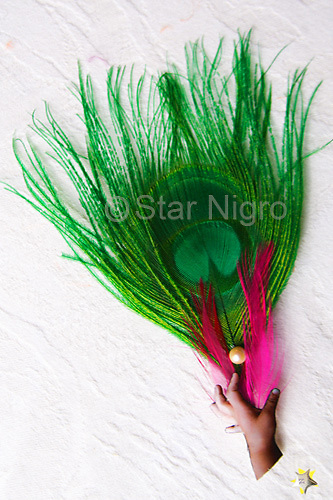 """Pearl in Hand Photo Jewelry Accessory handmade with love by Star Nigro.<br /> <br /> This can be worn as a hairpiece/ accessory that can also be clipped  to a blouse,pocket book,hat etc. <br /> <br /> Materials: hand photo,green & magenta colored peacock feathers,fresh water pearl,barrette clip<br /> <br /> size: 4 1/2"""" x 1/8"""" x 2""""<br /> <br /> price: $52.00<br /> <br /> <br /> + Giveback/Impact<br /> When you make a purchase from this site 7%  will be shared with a non-profit that focuses on making a positive difference in the world today.<br /> <br /> Buying art  + Making a difference = Art with Heart<br /> <br /> photo by Star Nigro<br /> <br /> StarNigro.com<br /> <br /> ©2021 All artwork is the property of STAR NIGRO.  Reproduction is strictly prohibited."""