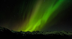 A spectacular display of the Aurora Borealis or as it is commonly called, the northern lights, occurred the evening of November 8 through the early morning of November 9, 2013 over Sinclair Mountain and other mountains in the Kakuhan Range at Haines, Alaska. The luminous glow in the upper atmosphere stretched across the skies above the Lynn Canal from Skagway to Juneau. The bottom edge of an aurora is typically 60 miles high with the top edge at an altitude of 120 to 200 miles, though sometimes high altitude aurora can be as high as 350 miles. The collision of sun storm electrons and protons with different types of gas particles in Earth's atmosphere cause the different colors. Green, the most common color, is caused by the collision of electrons with atoms of with atomic oxygen.