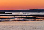 Clam digging, Hampton Bays, New York, Southampton, Shinnecock Bay