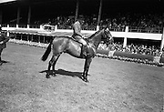 """09/08/1967<br /> 08/09/1967<br /> 09 August 1967<br /> R.D.S. Horse Show, Ballsbridge, Dublin. """"Urney Road"""", Michael Hickey up, property of Mrs E. Wood, Chaddesley Corbett By Kidderminster, Worcester England, bred by S.W. Rule, Co. Down, winner of the RDS Perpetual Champion Cup in the Best Hunter in the show."""