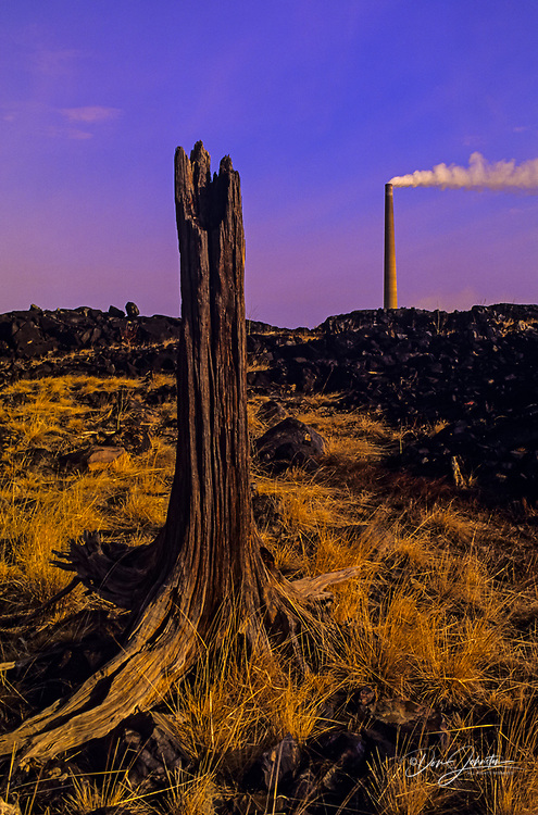 Dead stump in ecologically disturbed landscape, with Vale INCO Superstack in distance, Greater Sudbury, Ontario, Canada
