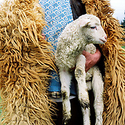 A shepherd wearing a sheepskin cloak carries a lamb at a sheepfold in the Carpathian mountains, Romania
