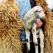 A shepherd wearing a sheepskin cloak carries a lamb at a sheepfold in the Carpathian mountains, Romania