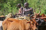 Mursi tribeswomen herding cattle Africa, Ethiopia, Debub Omo Zone, Mursi tribe is a nomadic cattle herder ethnic group located in Southern Ethiopia, close to the Sudanese border.
