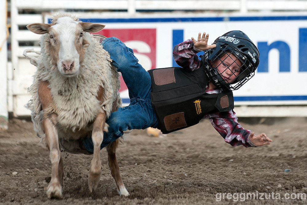 Mutton Bustin'. Vale 4th of July Rodeo, Vale Rodeo Arena, Vale, Oregon, July 4, 2015.