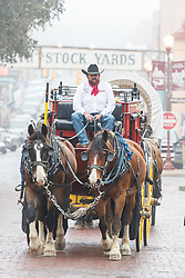 Stagecoach on East Exchange Ave, Fort Worth Stockyards National Historic District, Fort Worth, Texas, USA.