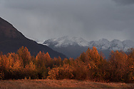 Autumn Colors adorn tress with snow covered mountains in the distance