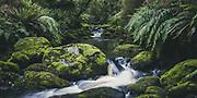 One of many rivulets and streams, The Southern Circuit, Stewart Island / Rakiura, New Zealand Ⓒ Davis Ulands | davisulands.com