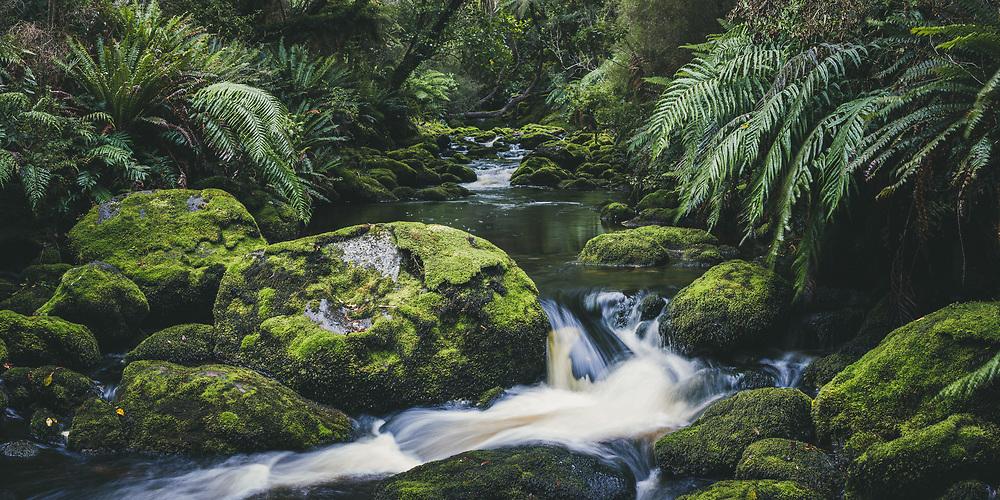 One of many rivulets and streams, The Southern Circuit, Stewart Island / Rakiura, New Zealand Ⓒ Davis Ulands   davisulands.com