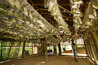 Parataxonomists at Ohu Bush Lab monitor hanging plastic bags containing caterpillars and food plants for moths collected from the rain forest.