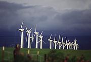 Windmills, South Point, Island of Hawaii<br />