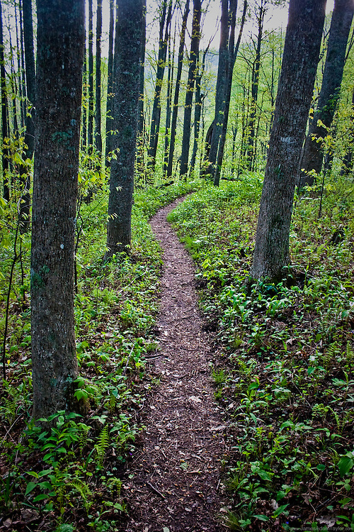 Trail through the southern hardwoods.