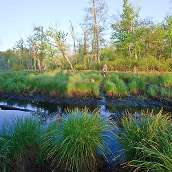 Sedges grow on the edge of Fish Brook at Windrush Farm in North Andover, Massachusetts.