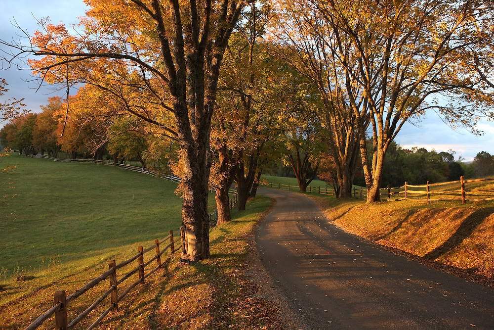Driveway at Ashlawn in Albemarle County, VA. Photo/Andrew Shurtleff