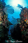coral canyon, Biscayne National Park, Homestead, Florida ( Atlantic Ocean )