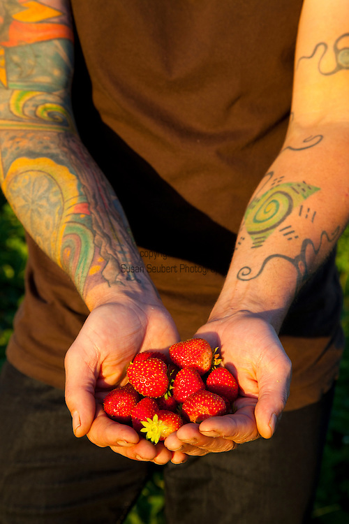 Meriwether's Restaurant is  one of the few restaurants operating their own 5 acre vegetable farm on Skyline Blvd. in NW Portland.  Throughout the 2009 harvest, the restaurant has served over 8000 pounds of Skyline Farm produce.  Chef Earl Hook holding fresh strawberries still growing in early October.