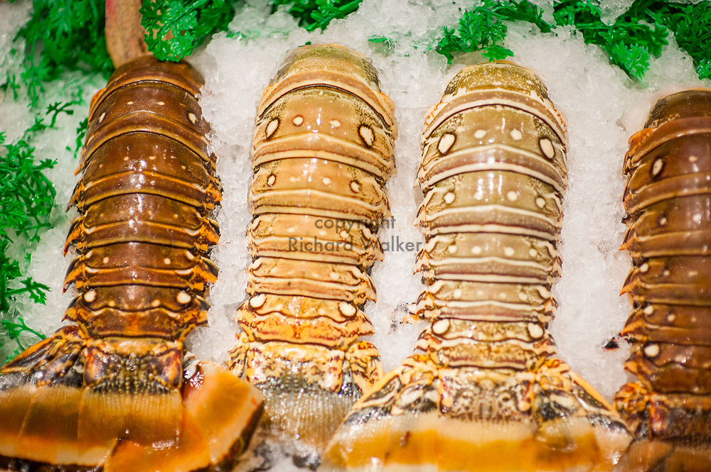 2018 MAY 15 - Lobster tails for sale in Pike Place Market in Seattle, WA, USA. By Richard Walker