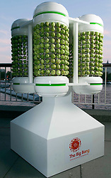 © Licensed to London News Pictures. 26/11/2013. London, UK The sprout Battery.  A team of scientists and engineers from The Big Bang UK Young Scientists and Engineers Fair have created the world's first battery made entirely of Brussels sprouts, which was used to light an 8 foot Christmas tree on London's South Bank. The battery used 1,000 Sprouts in total to light 100 LEDs. Photo credit : CPG /LNP