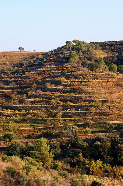 Terraced vineyard. Priorato, Catalonia, Spain