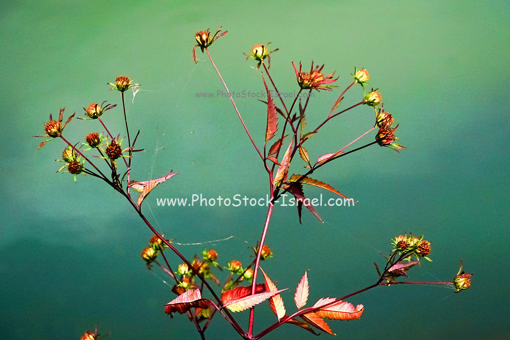 Soft selective focus of a drying flower on green background