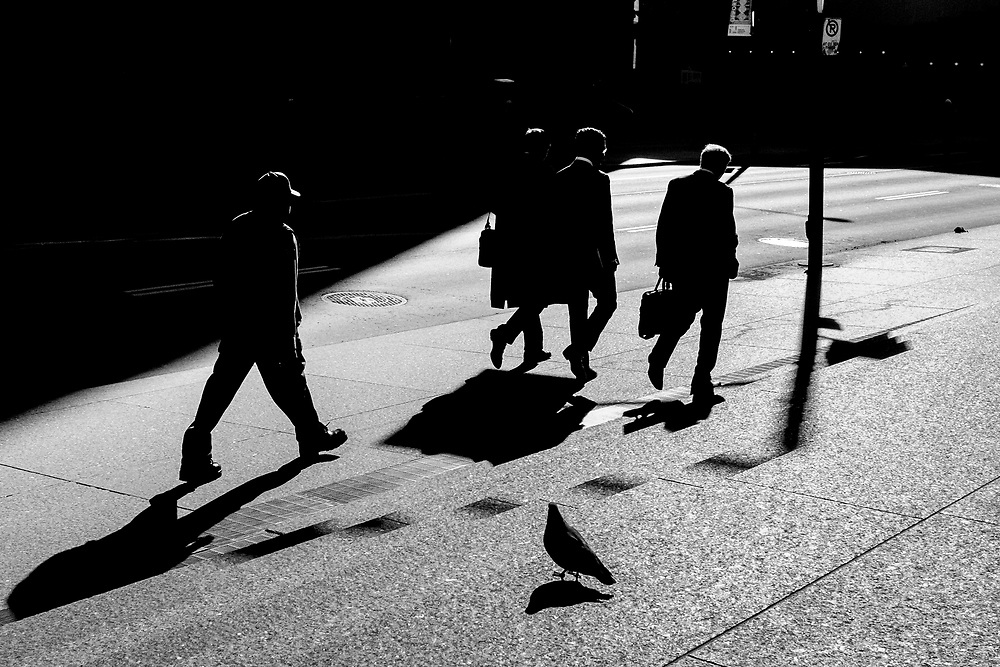 The light during the late fall and early winter days is really good amongst the tall buildings of Toronto's financial district. In fact the natural light is spectacular at times. Around mid day these people were walking south into the sun and the shadows being long and intense is what drew my attention to the scene. Pigeons are also a fact of urban existence. I waited until the right sequence of people moved into and through the scene. The pigeon was a bonus as he hung around for the 10 minute time period of finding a decent composition.