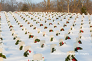 65095-02913 Wreaths on graves in winter Jefferson Barracks National Cemetery St. Louis,  MO
