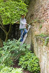 Gardener watering plants on a ledge at Sissinghurst Castle Garden
