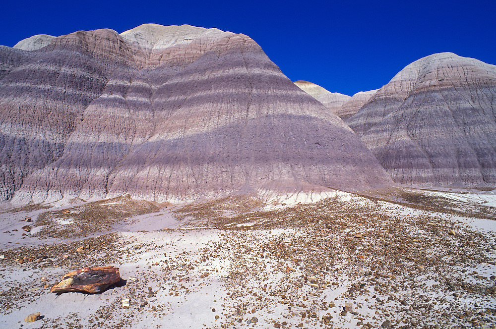 Morning light on colorful strata and petrified log sections on Blue Mesa, Petrified Forest National Park, Arizona