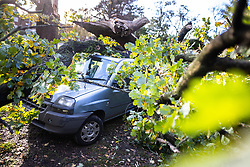 © Licensed to London News Pictures . 31/10/2020. Manchester , UK . An oak tree has broken apart and fallen on top of cars just metres away from houses on Yewtree Lane in Wythenshawe , South Manchester , as Storm Aiden brings heavy winds and rain . Photo credit : Joel Goodman/LNP