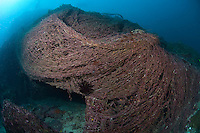 Discarded Trawlers' nets smothering the reef