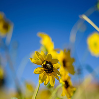 Wildflowers are packed with pollen near Gallup Thursday.