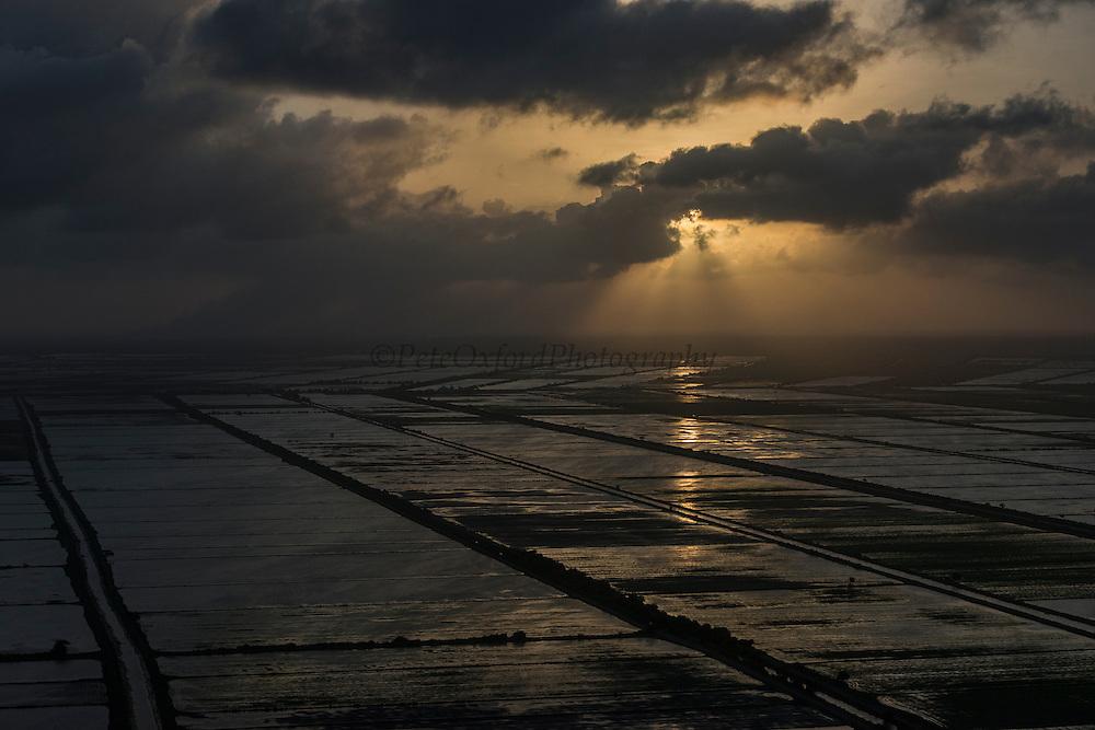 Rice production<br /> East Coastal area<br /> GUYANA<br /> South America