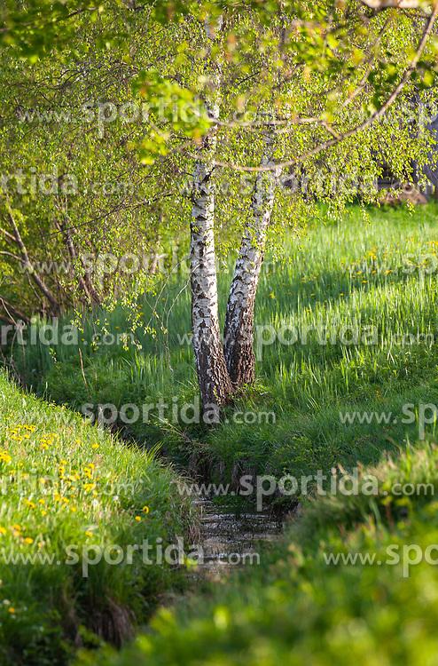 THEMENBILD - Birken an einem kleinen Bach, aufgenommen am 28. April 2018, Kaprun, Österreich // Birches at a small stream on 2018/04/28, Kaprun, Austria. EXPA Pictures © 2018, PhotoCredit: EXPA/ Stefanie Oberhauser
